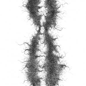 chrisbradyheritage1